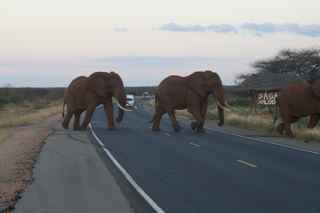Watch the elephants cros the Mombasa Highway!